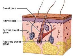Excessive Sweating In Groin Area (Male): Cause, Treatment